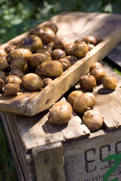 Bio-a-fair-trade-dansko-brambory