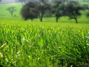 Nemoci-a-urazy-tráva