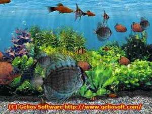 3D Fish School Screen Saver 3.94 - náhled