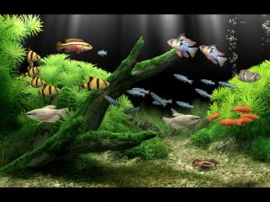 Dream Aquarium Screensaver 2.46