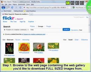 Bulk Image Downloader 4.80.0.0 - náhled