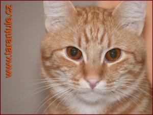 Kočičí domek 2 - náhled