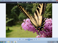 Windows 7 Beta 1 - Photo Viewer