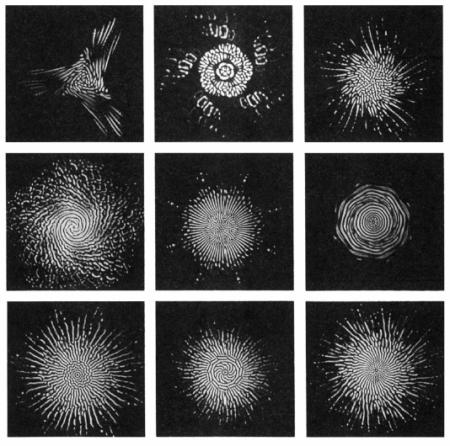 fractals80_d.png
