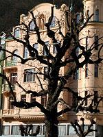 Strom před domem